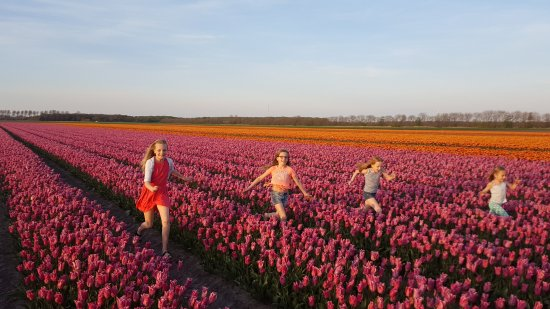Kwekerij Siem Munster (Tulip Excursion)