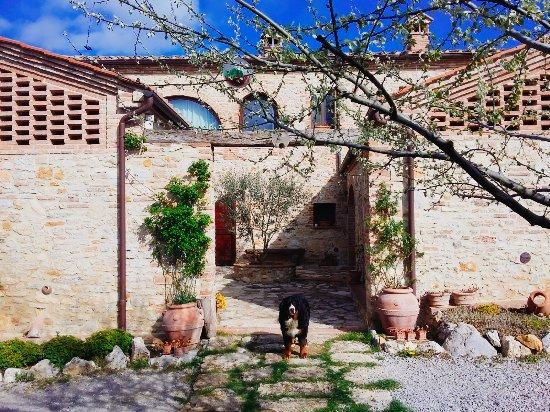 Serre di Rapolano, Italia: 2017-03-26-10-27-15-176_large.jpg