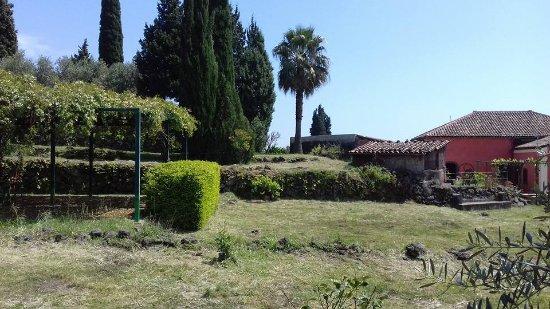 Santa Venerina, Italia: La zona pic nic ( a sinistra) è distante dagli edifici del Museo del Palmento, quindi massima in