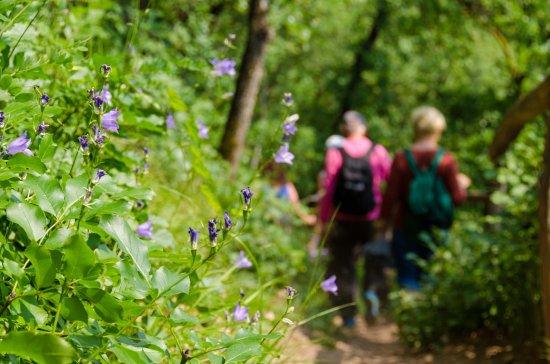 Wandern auf dem Naturerlebnisweg in Tramin