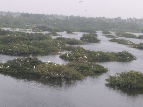 Vedanthangal Bird Sanctuary: Bird Sanctuary