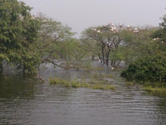 Vedanthangal Bird Sanctuary: Lake View