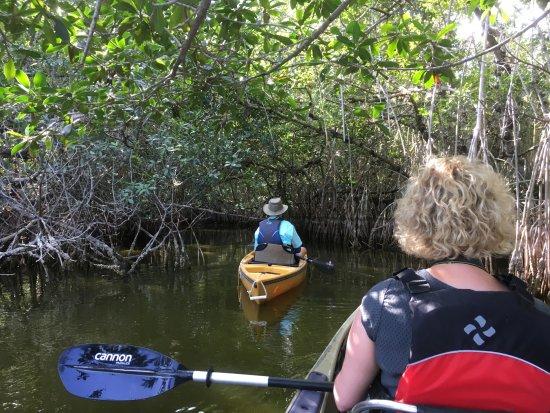Everglades Area Tours : Einfahrt in Mangroven Tunnel
