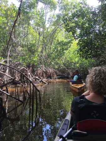 Everglades Area Tours: Mangroven Tunnel