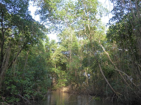 St. Ann's, Trinidad: through the mangroves