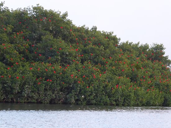 St. Ann's, Trinidad: water, trees and scarlet ibis