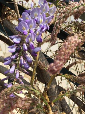 Rivoli Veronese, Ιταλία: Menù di asparagi