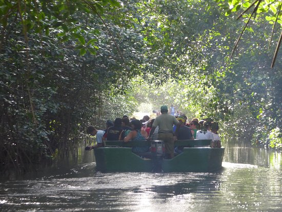 Nanan's Caroni Bird Sanctuary Tours