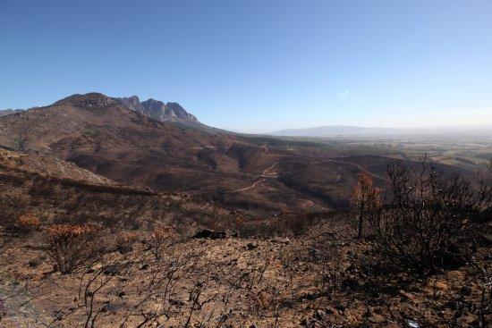 Western Cape, Güney Afrika: Ein Feuer im Frühjahr 2017 zerstörte über 6.000 km2 Waldfläche