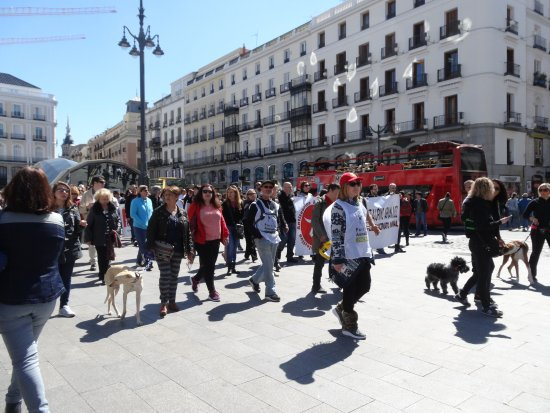 Img tkr8r6 picture of puerta del sol madrid for Puerta 53 bernabeu