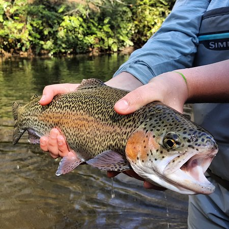 Whittier, Carolina del Nord: Soque River Private water Rainbow Trout