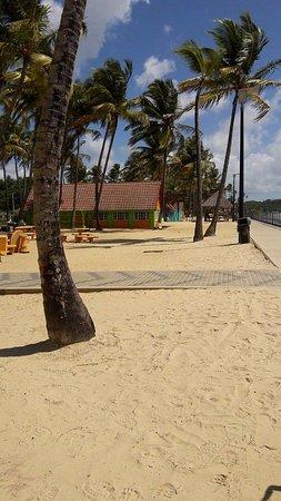 Manzanilla Beach: who doesn't love coconut trees