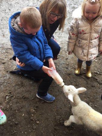 Bacup, UK: Feeding the lambs