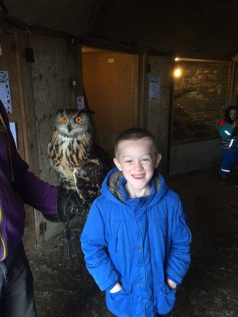 Bacup, UK: Owl !!!😃