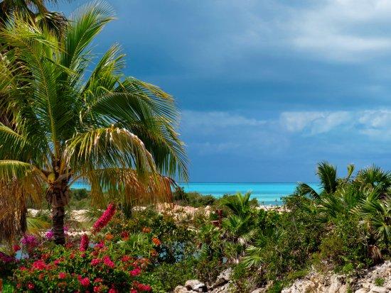 Harbour Club Villas & Marina: Blooming bouganvillea poinsiana, coconut palm overlooking the ocean