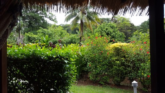 Coco Loco Lodge: From bungalow porch, great place for reading, writing, relaxing.