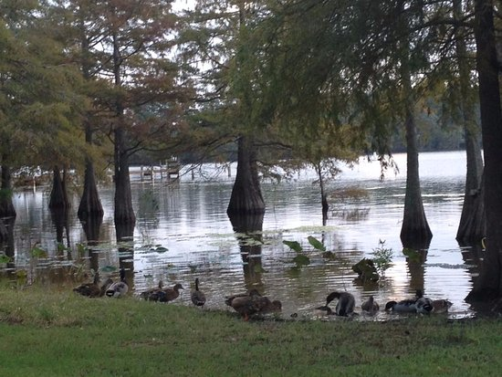 Summerton, SC: lake view with ducks