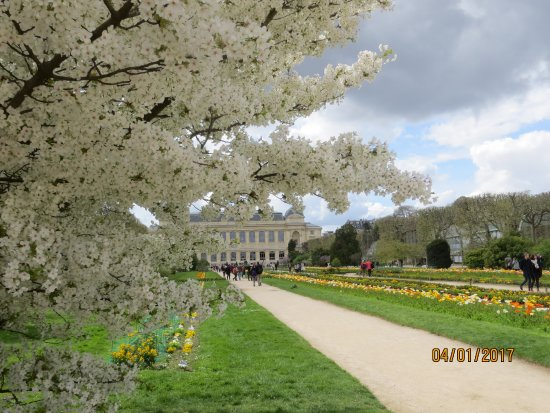 Cherry Tree White Flowers Foto Van Jardin Des Plantes Parijs