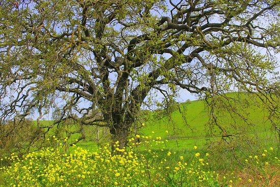 Gilroy, CA: Wild flowers Harvey Bear Loop trail