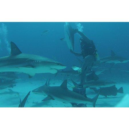 Isla Nueva Providencia: photo3.jpg