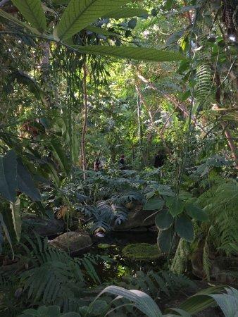 ambiance tropicale picture of jardin des plantes paris tripadvisor. Black Bedroom Furniture Sets. Home Design Ideas