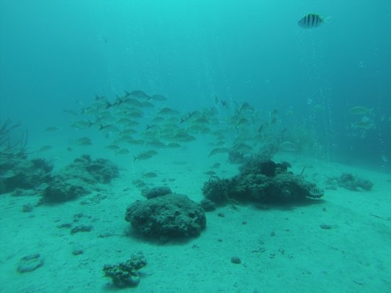 Bahama Divers: photo2.jpg