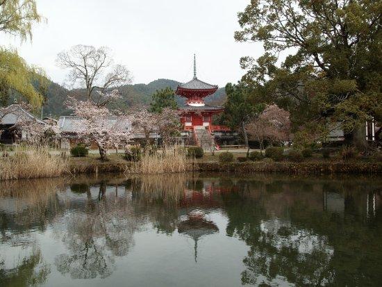Osawaike: 桜と多宝塔が写る池