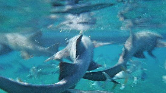 Caye Caulker, Belize: Fotor_14921414966786_large.jpg