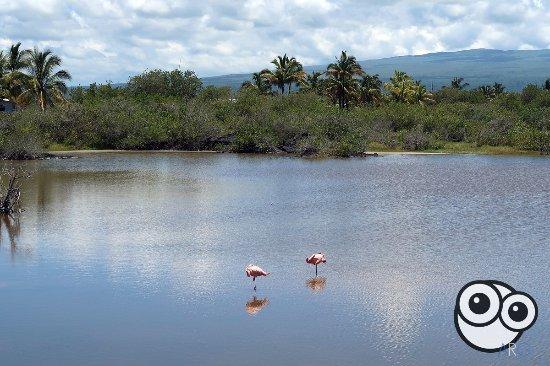 Puerto Villamil, Ekwador: La laguna y los flamencos