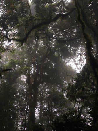 Altos De Campana National Park: photo1.jpg