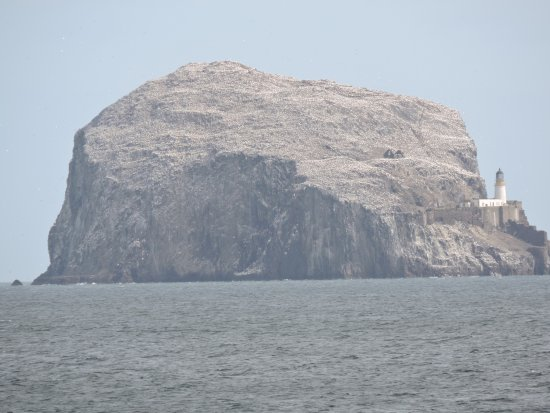Bass Rock Lighthouse - view from Sea Bird Centre - Picture
