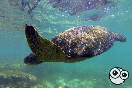 San Cristobal, Ecuador: Tortugas marinas
