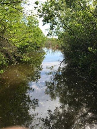 High Island, Техас: Ponds