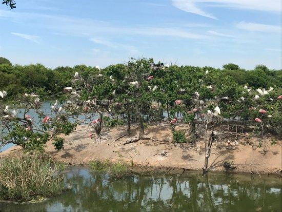 High Island, Техас: Rookery