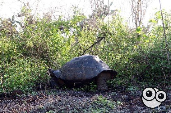 Puerto Villamil, Ekwador: Tortugas a nuestro paso