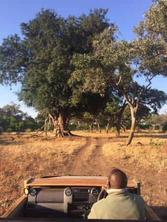 Mashatu Tent Camp: The beautiful reserve