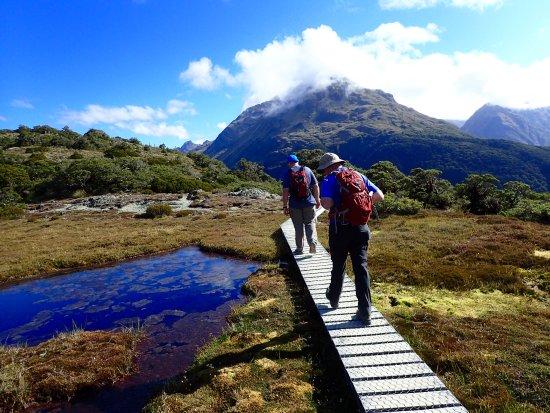Milford, Nueva Zelanda: Key Summit Track - Nature Loop at top