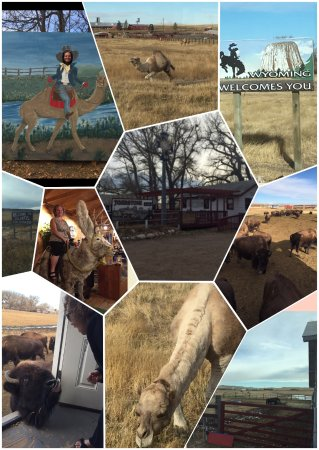 Cheyenne, WY: Collage of photos from Terry Bison Ranch