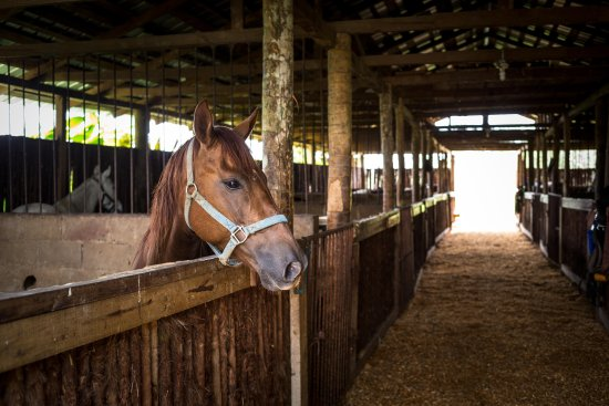 Blancaneaux Lodge: Our own horses for rides to local waterfalls