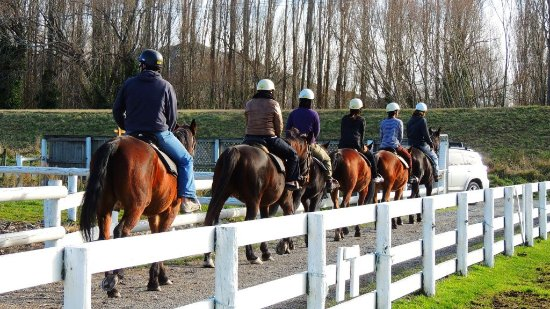Waimak River Riding Centre