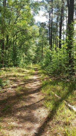Live Oak, FL: Beautiful hiking trails inside the park