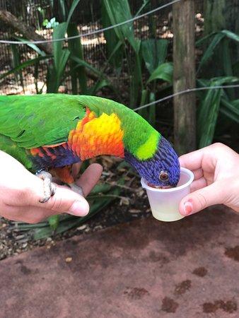 Jacksonville Zoo & Gardens: photo8.jpg