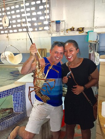 Lobster Alive : photo0.jpg