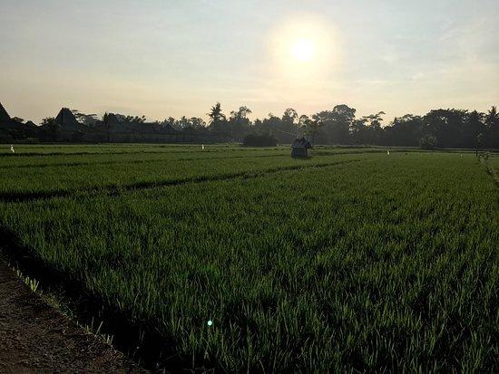 Villa Arya Ubud : Morning view of the paddy fields from Villa Arya