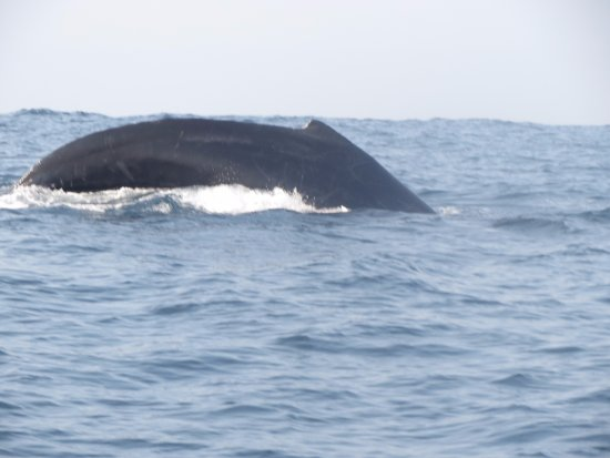 Omar's sportfishing: Humpback whale off the coast of Playa Zicatela, Puerto Escondido, Oaxaca