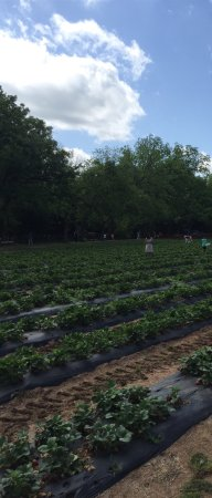 Marble Falls, TX: Sweet Berry Farm