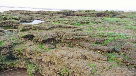 Nairn, UK: exploring the tidal pools and limestone ledges