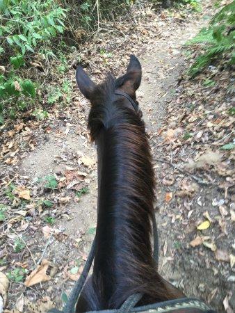 Discovery Horseback Tours: photo0.jpg