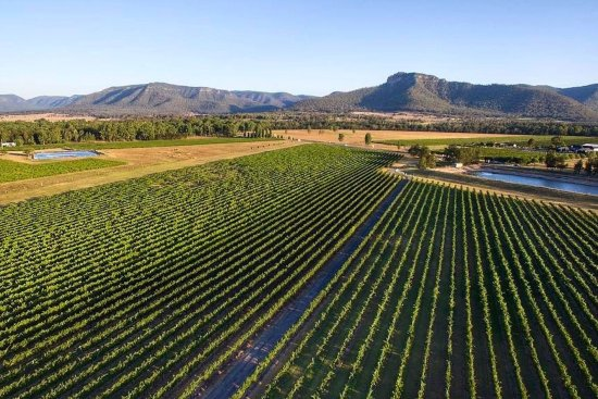Broke, Australia: 22 acres of vinyard, with a stunning view of Yellow Rock