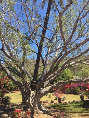 Hacienda De Los Santos: photo9.jpg